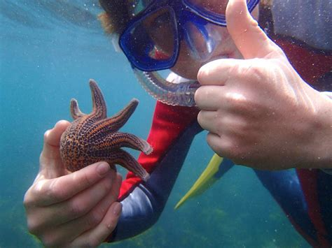 Website Of The Week Starfish by Seaweek New Zealand S Annual National Week About The Sea