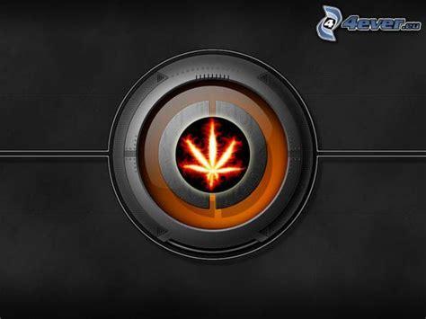 Ganja Abstact marihuana