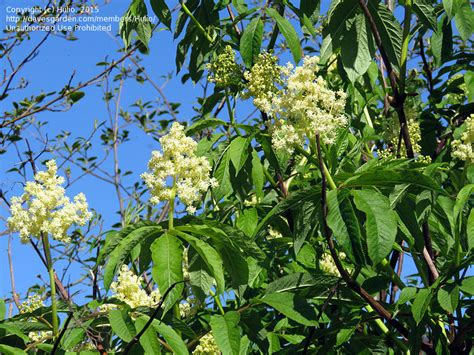 flowering shrubs canada plant identification 2 flowering trees pacific northwest
