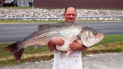 missouri fisherman hauls  record breaking  pound