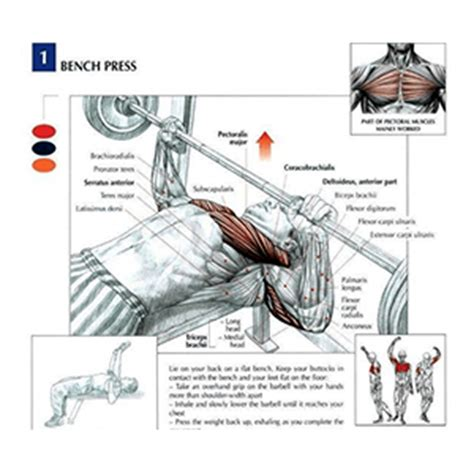 muscle groups used in bench press gym equipment guide for beginners names and pictures