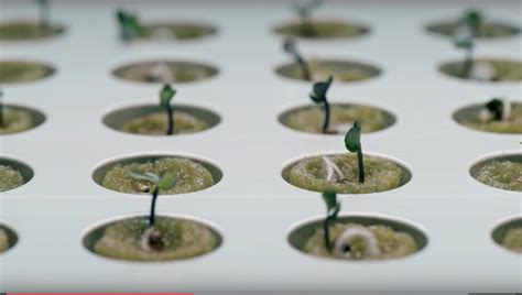 Ikea Hydroponics Garden Indoor Gardening With Hydroponics Youtube