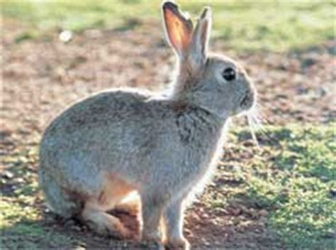 getting rid of rabbits in backyard get rid of the pesky rabbits with plantskydd rabbit