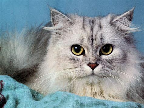 imagenes de jardines con gatos cortarle el pelo al gato