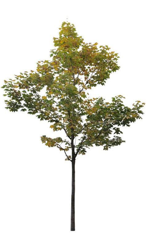 for tree 332 best tree arboles images on tree psd