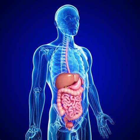 imagenes reales de organos del cuerpo humano 10 curiosidades sobre el cuerpo humano batanga