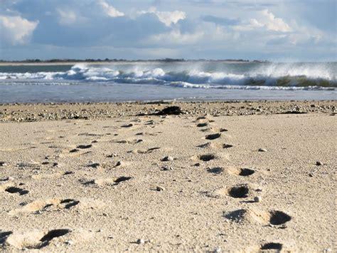mã bel spot 1047 best images about mer chaleur coquillages et