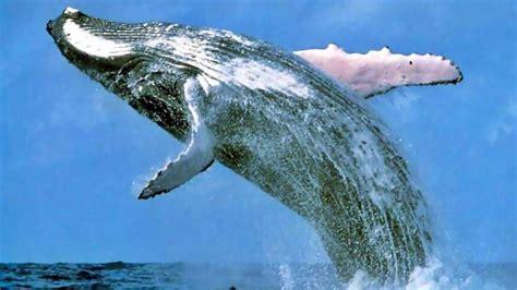 imagenes inspiradoras de animales animales mas grande del mundo documental es pictures to