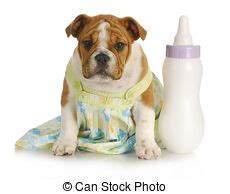 can shih tzu drink milk puppy milk stock photos and images 339 puppy milk pictures and royalty free
