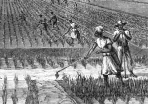 the economy of south carolina the crucial decade 1780s