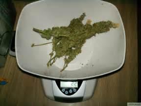 Gram of weed looks like