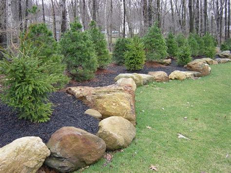 Buy Rocks For Garden 25 Best Ideas About Evergreen Landscape On Pinterest Privacy Landscaping Blue Spruce And