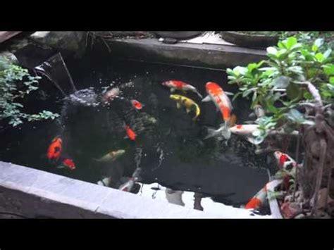 kolam ikan koi  depan rumah youtube