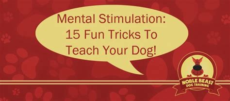 cool tricks to teach your 15 tricks to teach your denver noble beast