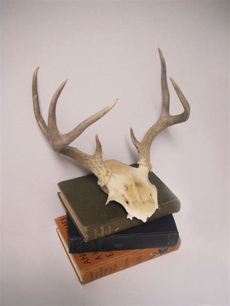 deer antler home decor vintage 7 point deer antler skull wall decor