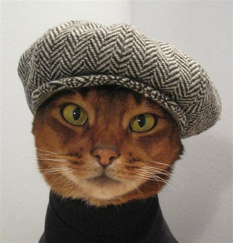 cat in hat cats wearing hats