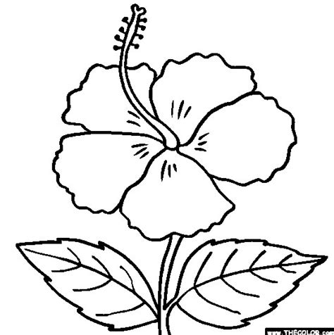 Kembang Putih gambar bunga kembang sepatu hitam putih gambar pedia