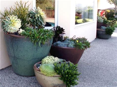 front yard potted plants landscaping with succulents succulent front yard