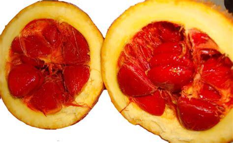 Jual Bibit Buah Gac Gac Fruit Buah Gac Segalanya Tentang Tumbuhan