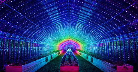 These Neon Lights Show plant a greenhouse in tokyo bursts into a dazzling light show when you touch the plants