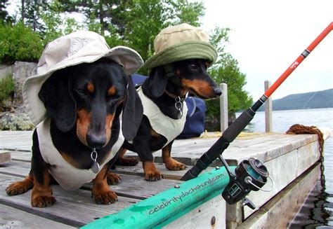 fish for puppies the who to fish crusoe the dachshund goes fishing