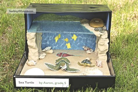 How To Make A Diorama Out Of Paper - habitat dioramas dioramas turtle and school