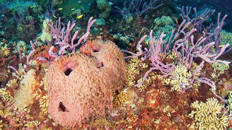 what is killing the gulf of mexico s coral reefs