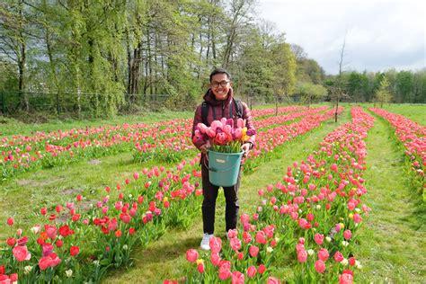 Bibit Bunga Tulip Di Bandung petik bunga tulip sepuasnya di antwerp wira nurmansyah