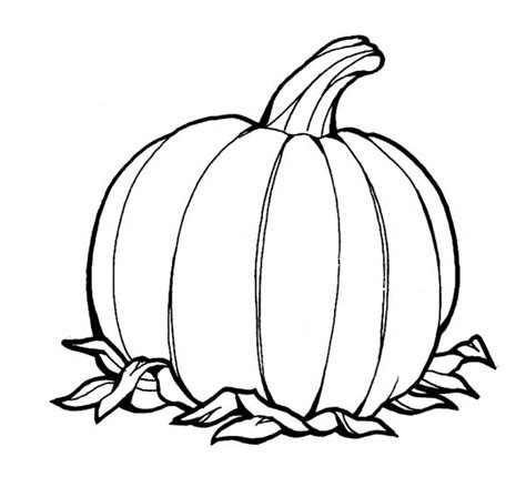 pictures of pumpkins to color awesome pumpkins fruit coloring page awesome pumpkins
