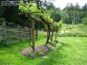 Wine Trellis Best 25 Grape Arbor Ideas On Pinterest