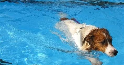 can all dogs swim the in world can all dogs swim