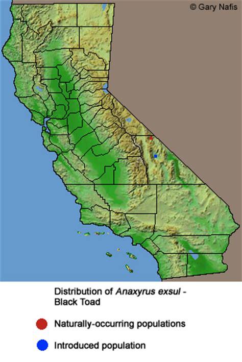 california map key key to identifying toads in california