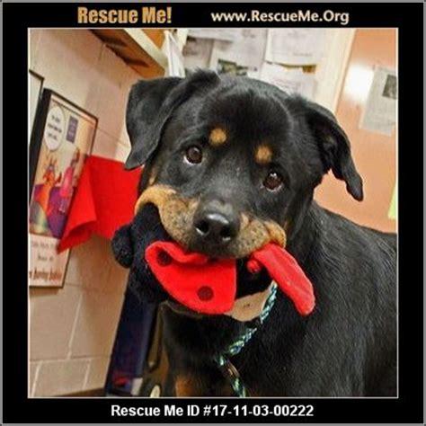 rottweiler rescue idaho ohio rottweiler rescue adoptions rescueme org