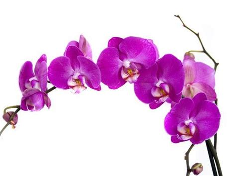 what color match purple collage 2 radiant orchid purple color radiant orchid 2014 color of the year is all about joy