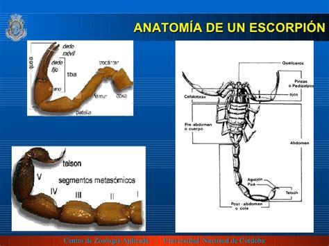 anatomia de un instante 849062349x los escorpiones
