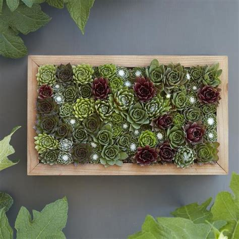 Succulent Frame My Farmscape - vertical gardening with succulent living pictures