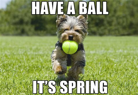 First Day Of Spring Meme - image gallery spring meme