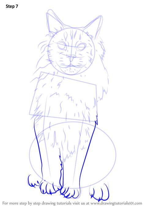 how to a coon learn how to draw a maine coon cats step by step drawing tutorials
