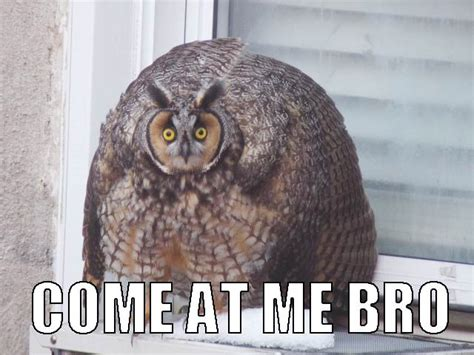 Who Owl Meme - funny come at me bro owl