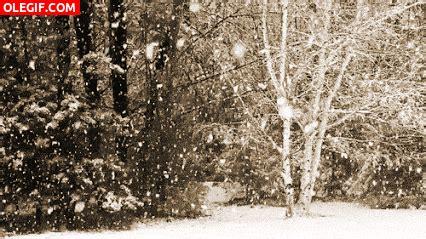 imagenes gif nevando gif nevando en el bosque gif 3132