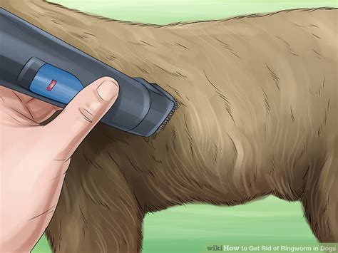 how to get rid of ringworm on dogs 3 ways to get rid of ringworm in dogs wikihow