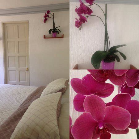 orchid room tao bed breakfast updated 2017 b b reviews price comparison mexico city tripadvisor