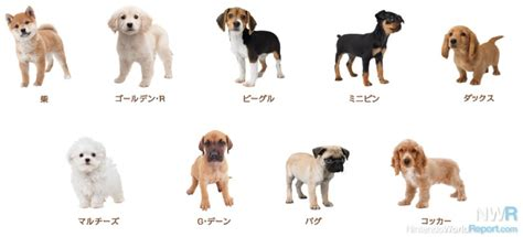 nintendogs and cats golden retriever breeds nintendogs cats breed lists revealed news nintendo world report