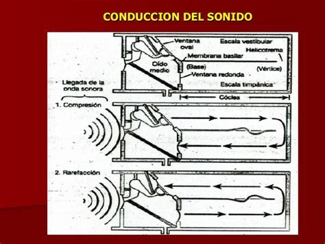 Audicion Y Equilibrio by Fisiolog 237 A Audicion Y Equilibrio