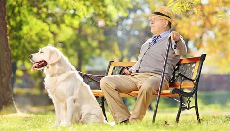 how do dogs live for how do dogs live your s lifespan top tips