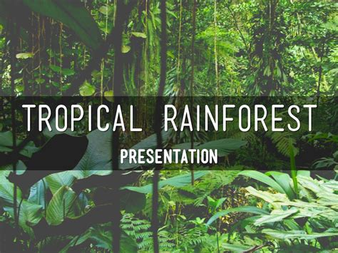 Tropical Rainforest Presentation By Olivia Corner Rainforest Powerpoint