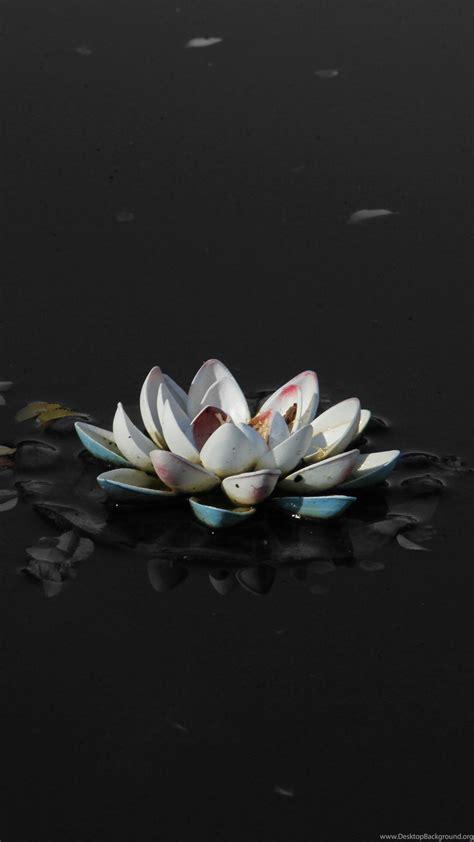 lotus flower black  white photography wallpaper