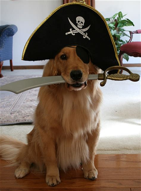 pirate puppy pirate dogs a gallery on flickr
