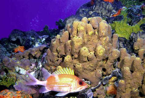 Noaa Noaa Releases Draft Management Plan For Flower Flower Gardens National Marine Sanctuary