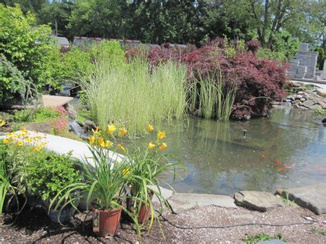 Water Garden Supplies by Water Gardening Harken S Landscape Supply Garden